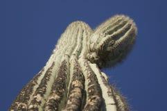 Le soleil chaud sur le cactus Image libre de droits
