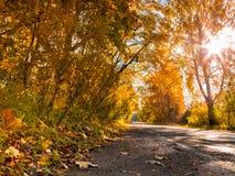 Le soleil, chute, bois, route Images libres de droits
