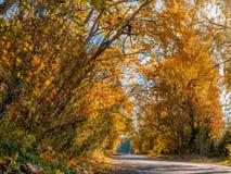 Le soleil, chute, bois, route Photographie stock