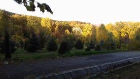 Le soleil d'après-midi image stock