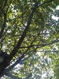 Le soleil d'après-midi image libre de droits
