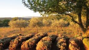 Le soleil d'après-midi dans Gordes les Frances de Luberon Photos stock