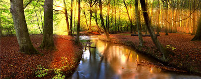 Le soleil d'après-midi dans la forêt Images stock
