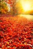 Le soleil d'après-midi sur des lames d'automne Photos libres de droits