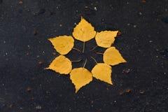 Le soleil d'automne Photo stock