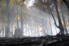 Le soleil d'automne photographie stock