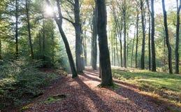 Le soleil d'automne brille par les arbres Photographie stock libre de droits