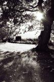 le soleil d'Autum de jardin Image libre de droits