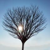 Le soleil d'hiver Photo libre de droits