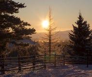 Le soleil d'hiver de coucher du soleil sur un fond des arbres couverts de neige Photographie stock
