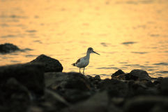 le soleil d'oiseaux Photographie stock