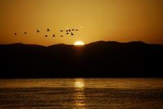 le soleil d'oiseaux Photos stock