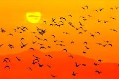 le soleil d'oiseaux Images libres de droits