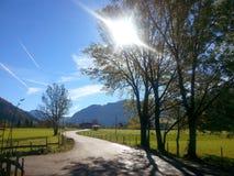 Le soleil de ciel d'arbre Photos stock