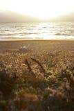 Le soleil de configuration sur l'herbe Photographie stock