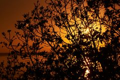 Le soleil de coucher du soleil d'aube par la découpe noire de branches d'arbre du branche images libres de droits