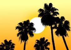 Le soleil de désert d'oasis Photo libre de droits