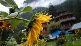 Le soleil de fleur dans l'Inde du nord Photo libre de droits
