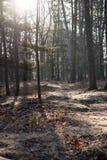 Le soleil de forêt de matin Image libre de droits
