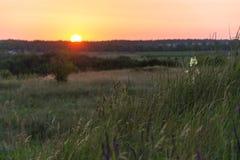 Le soleil de juillet de coucher du soleil Photographie stock