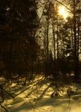 Le soleil de l'hiver Photographie stock