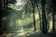Le soleil de matin brillant par les arbres Image stock