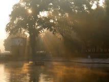 le soleil de matin de brouillard photo stock