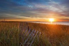 Le soleil de matin sur les herbes de dune Image stock