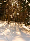 le soleil de neige photo stock