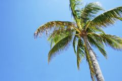 Le soleil de palmier Photos stock
