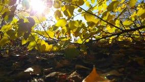 Le soleil de parc d'automne quitte le parc, lumière de feuillage d'usine de novembre de nature clips vidéos