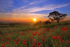 Le soleil de paysage Photographie stock