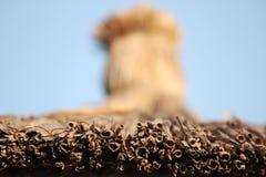 Le soleil de plage ombrage le parapluie Photo libre de droits