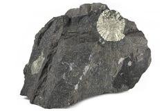 Le soleil de pyrite image stock