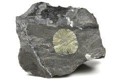 Le soleil de pyrite images stock