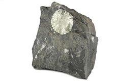 Le soleil de pyrite photo libre de droits