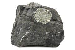 Le soleil de pyrite photographie stock libre de droits