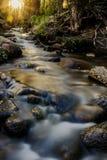 Le soleil de ressort dans la forêt Photo libre de droits