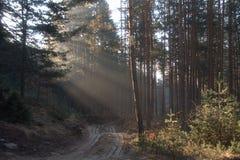 Le soleil de route d'arbres forestiers rayonne des ombres de ressort de matin Photo stock