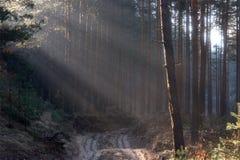 Le soleil de route d'arbres forestiers rayonne des ombres de ressort de matin Images libres de droits
