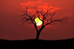 Le soleil de silhouette d'arbre Photographie stock libre de droits