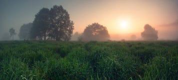 Le soleil de soirée au-dessus du pré de ressort Image stock