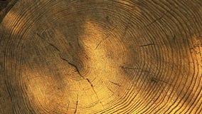 Le soleil de souche d'arbre forestier n'ombragent personne longueur de hd banque de vidéos