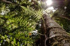 Le soleil de vue de forêt tropicale images stock