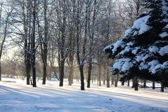 Le soleil en hiver Photo stock