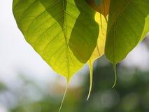 Le soleil envoie la belle couleur du Bouddha Photo stock