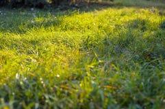 Le soleil est brillant par l'herbe verte Image stock