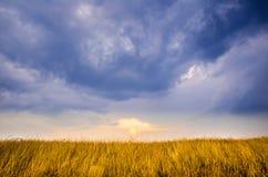 Le soleil est sur le point de placer au-dessus d'un champ d'or, symétriquement opposé à un ciel bleu merveilleux Image libre de droits