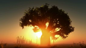 Le soleil et arbres rougeoyants de brouillard banque de vidéos