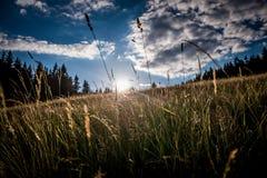 Le soleil et ciel extérieurs de petit morceau d'herbe photo stock